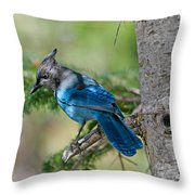 Jay Bird Throw Pillow