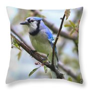 Jay In June Throw Pillow