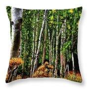 Jebediah Smith Wilderness Walk 2016 Throw Pillow