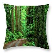 Jedediah Smith Redwoods                            Throw Pillow
