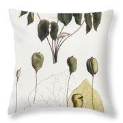 Jeffersonia Diphylla Throw Pillow