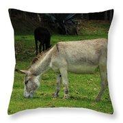 Jerusalem Donkey Grazing In A Field Throw Pillow
