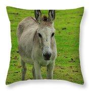 Jerusalem Donkey On A Farm Throw Pillow
