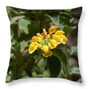 Jerusalem Sage Throw Pillow