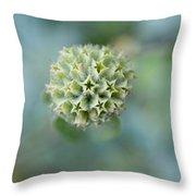 Jerusalem Sage Seed Head Throw Pillow