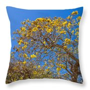 Jerusalem Thorn Tree Throw Pillow