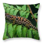 Jeweled Chameleon Furcifer Lateralis Throw Pillow