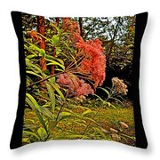 Joe-pye-weed Near Schroon River In New York Throw Pillow