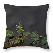 Joint Vetch With Dragon Fly Throw Pillow