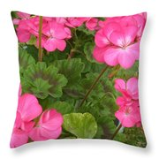 Joyful Geranium  Throw Pillow