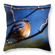 Juicy Male Eastern Bluebird Throw Pillow