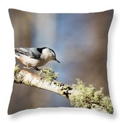 Jump - White-breasted Nuthatch Throw Pillow