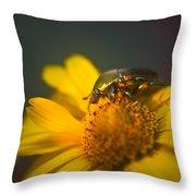 June Beetle Exploring Throw Pillow