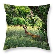 June Doe In Tall Grass Throw Pillow