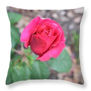 June Rose #5 Throw Pillow