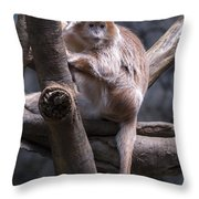 Jungle World Monkey3 Throw Pillow