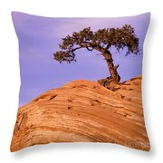 Juniper On Sandstone Throw Pillow