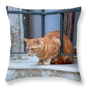Just Curious Cat Throw Pillow