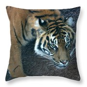 Just Getting A Drink Throw Pillow