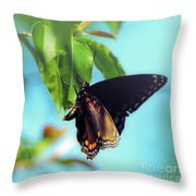 Just Hanging Out - Red-spotted Purple Butterfly Throw Pillow