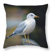 Looking Forward Throw Pillow by Cindy Lark Hartman