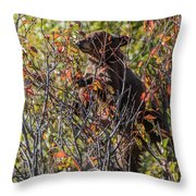 Just Looking For Berries Throw Pillow