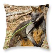 Just Snacking Throw Pillow