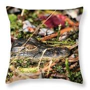 Juvenile American Alligator Throw Pillow