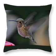 Juvenile Anna's Hummingbird Landing On Perch Throw Pillow