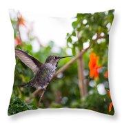 Juvenile Anna's Hummingbird Warm-up Throw Pillow