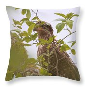 Juvenile Bald Eagle In Leaves Throw Pillow