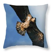 Juvenile Bald Eagle Two Throw Pillow