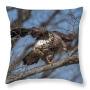 Juvenile Bald Eagle With A Fish Drb0218 Throw Pillow