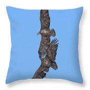 Juvenile Bald Eagles Drb0226 Throw Pillow