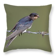 Juvenile Barn Swallow Side On Throw Pillow