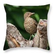 Juvenile Black Bird Turdus Merula Fledgling In Tree Stump In For Throw Pillow
