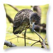 Juvenile Black Crowned Night Heron Throw Pillow