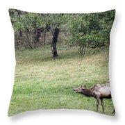 Juvenile Bull Elk Grazing 2 Throw Pillow