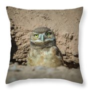 Juvenile Burrowing Owl-img_164817 Throw Pillow