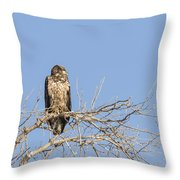 Juvenile Eagle 2015-7 Throw Pillow