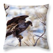 Juvenile Eagle Taking Off   Throw Pillow