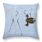 Juvenile Little Grebe Tachybaptus Ruficollis Throw Pillow