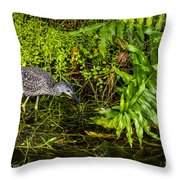 Juvenile Night Heron Throw Pillow