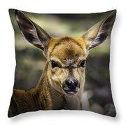 Juvenile Nyala  Throw Pillow