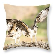 Juvenile Osprey Testing Their Wings Throw Pillow