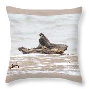 Juvenile Peregrine Falcon Throw Pillow