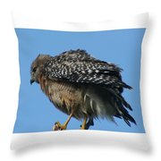 Juvenile Red-shouldered Hawk Throw Pillow
