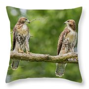 Juvenile Red-tailed Hawks Eyeing Each Other Throw Pillow