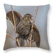 Juvenile Red Winged Blackbird Throw Pillow