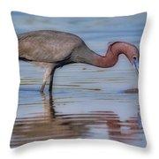 Juvenile Reddish Egret Throw Pillow